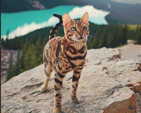 Популарно кај 3 милиони: Инстаграм само за љубителите на животни!